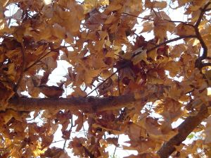 Small-bird-hides-in-the-branches-of-a tree-in-autumn-with-brown-leaves-providing-cover