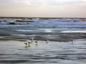 Emerald Isle Sunset supper