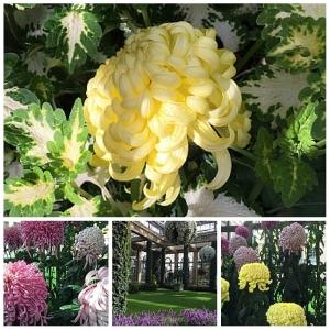 Longwood-Gardens-Chrysanthemum-Festival