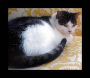 (cat)_pe