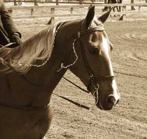 Sepia 634px-Tennessee_Walking_Horse_Head_pe