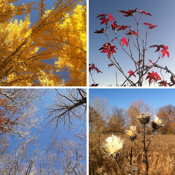 Longwood-Gardens-Late-Autumn