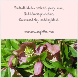 400px--Lenten-Roses-poem--by-randomstoryteller