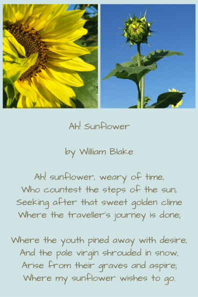 sunflowers randomstoryteller (1)