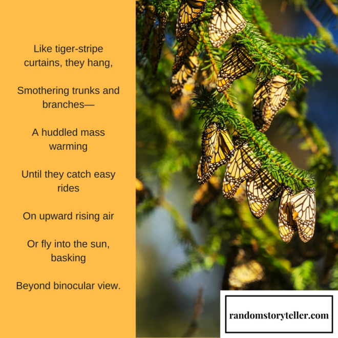 Monarchs-Royal Wind Riders, poem excerpt by randomstoryteller catherine hamrick with images of butterflies clinging to branches