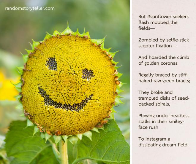 #Sunflower Selfie poem excerpt 2 by randomstoryteller chamrickwriter with image of injured sunflower